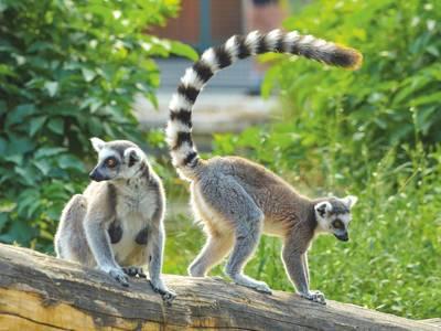 Safariland Stukenbrock Erlebnisresort - ausstattung